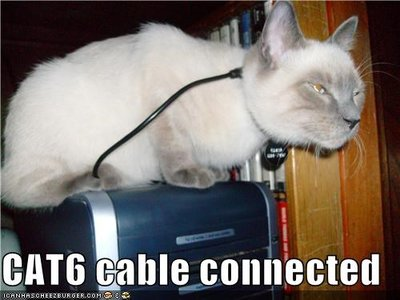 cat6-cable-connected.jpg