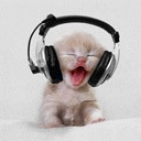 Cute kitten rocking with headphones