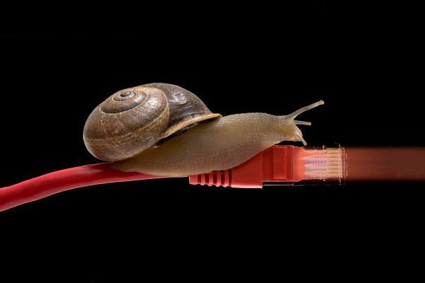 Snail slow network cable