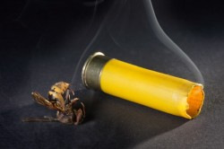 Dead wasp killed hunting shotgun cartridge